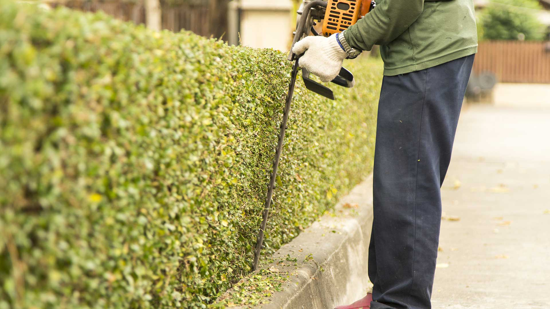 Sunnydale Lawn Care team member trimming hedges with a professional power trimmer.
